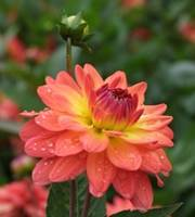 nature-flora[1]